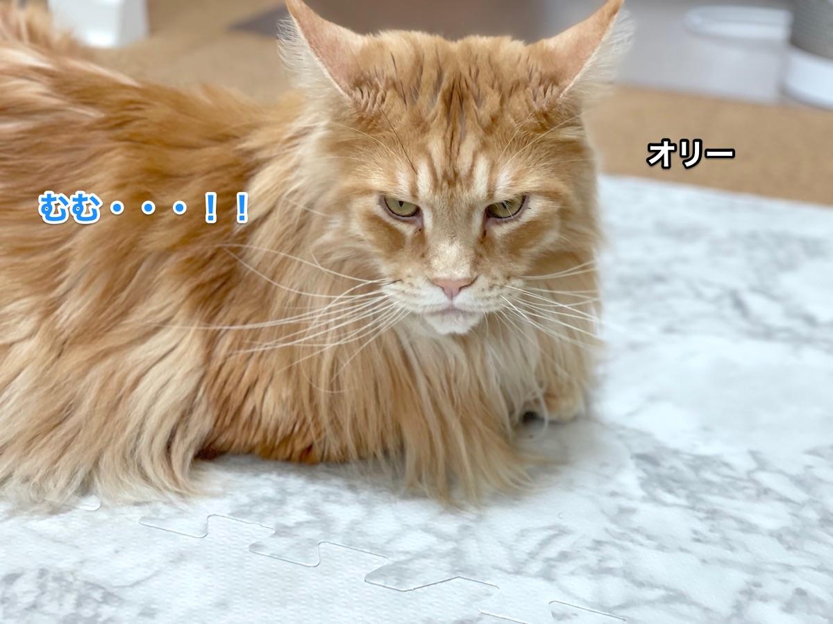 f:id:chikojirou:20201210211551j:plain