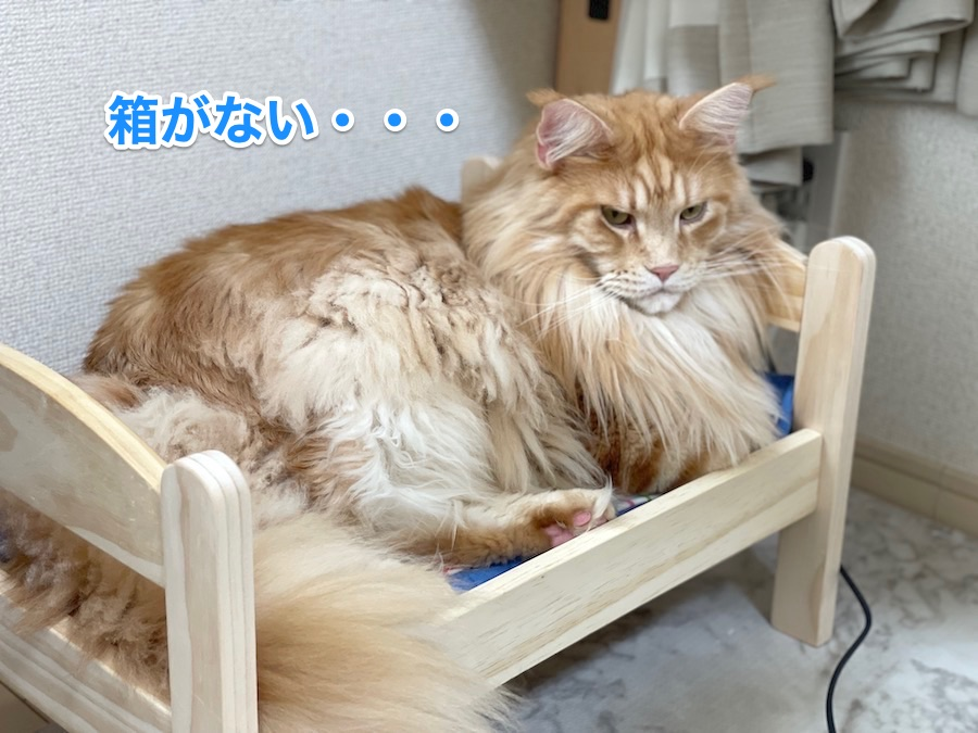 f:id:chikojirou:20201210211602j:plain
