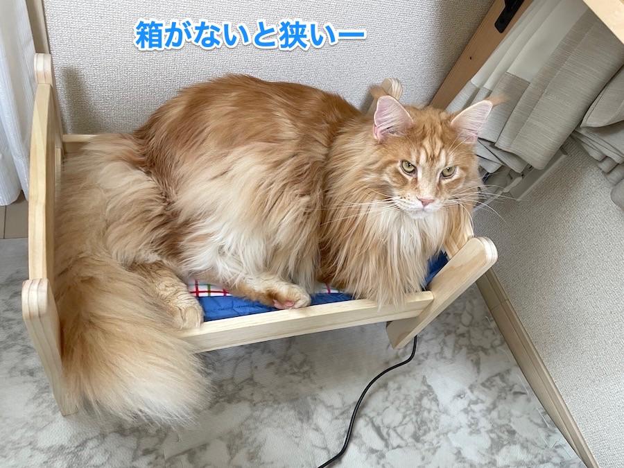 f:id:chikojirou:20201210211606j:plain