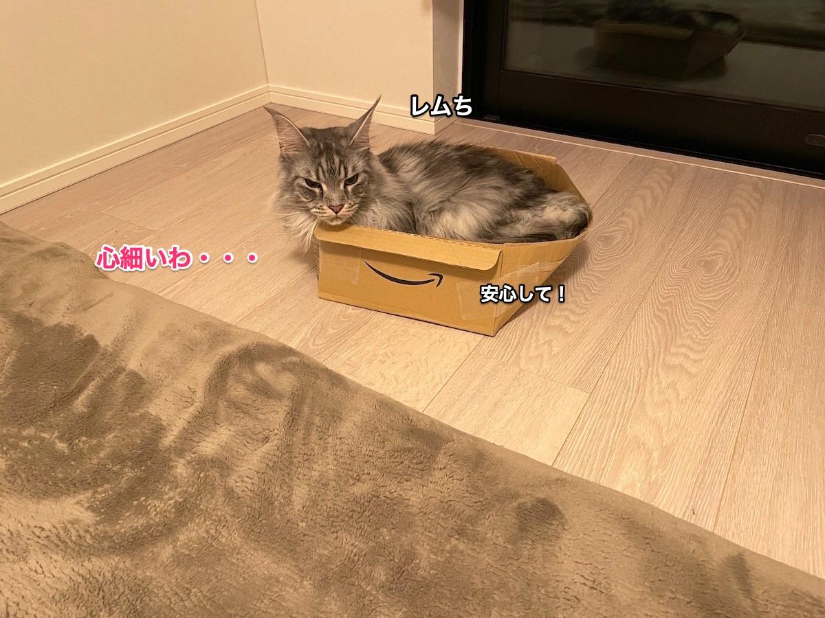 f:id:chikojirou:20210408220952j:plain