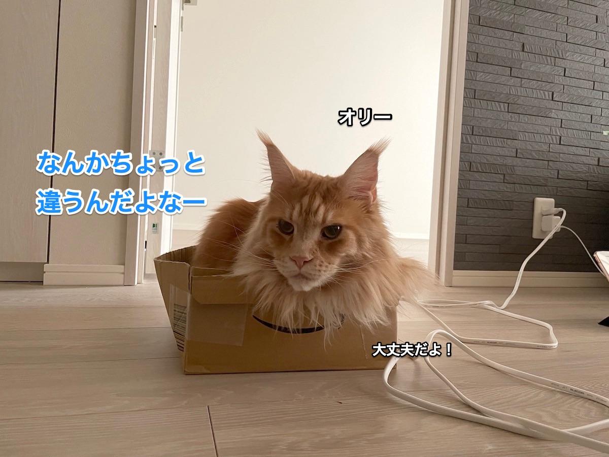 f:id:chikojirou:20210408220956j:plain