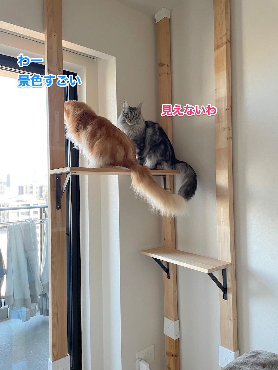 f:id:chikojirou:20210408221003j:plain