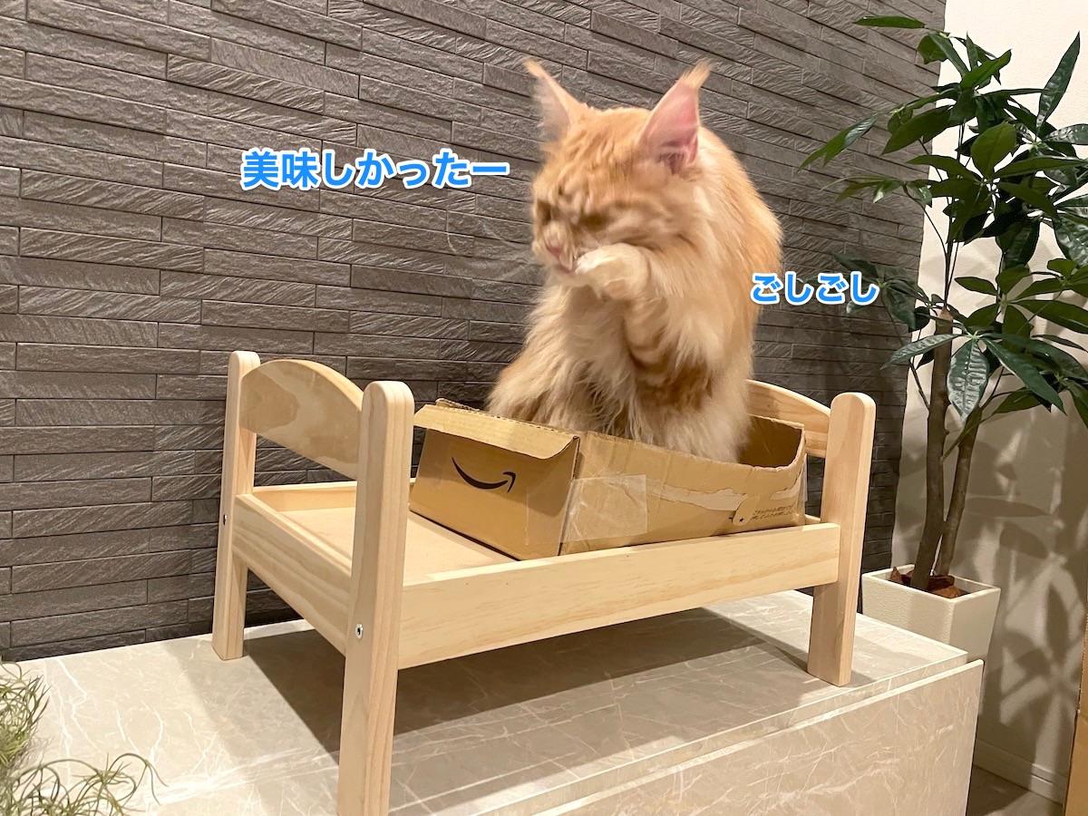 f:id:chikojirou:20210408221007j:plain