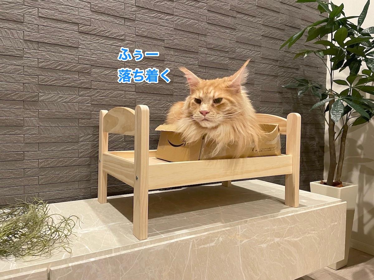 f:id:chikojirou:20210408221010j:plain