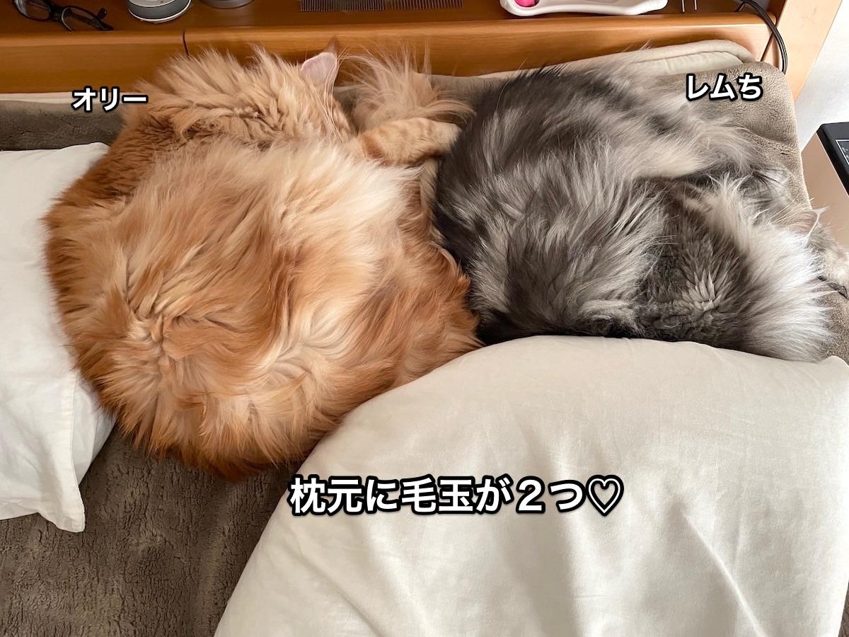 f:id:chikojirou:20210412202743j:plain