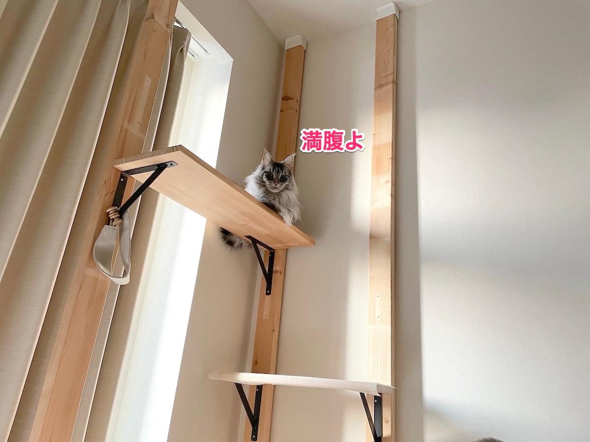 f:id:chikojirou:20210412202756j:plain