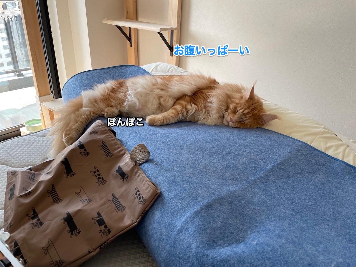 f:id:chikojirou:20210412202801j:plain