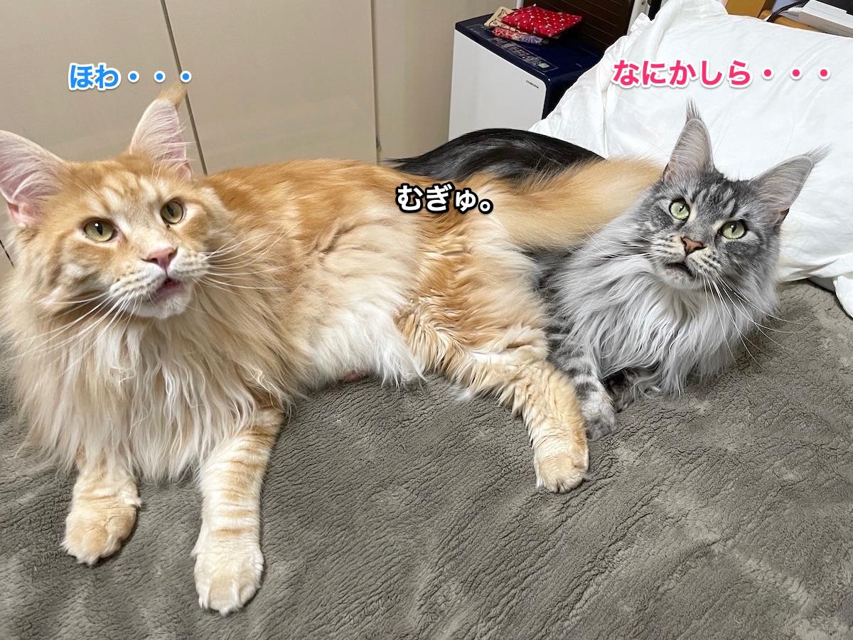 f:id:chikojirou:20210412202811j:plain