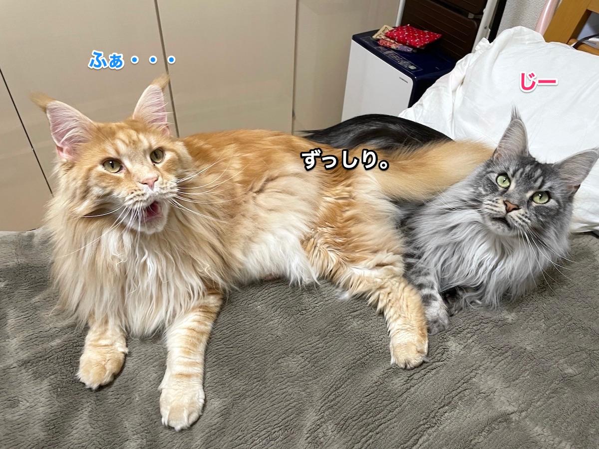 f:id:chikojirou:20210412202816j:plain