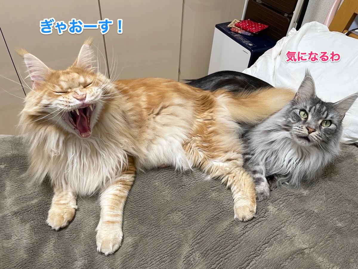 f:id:chikojirou:20210412202826j:plain