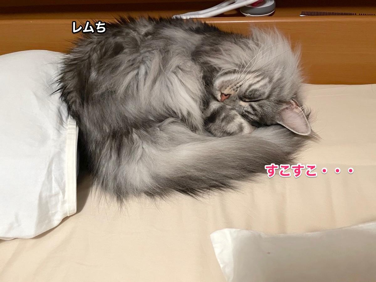 f:id:chikojirou:20210509214958j:plain