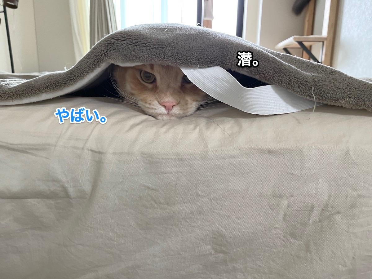 f:id:chikojirou:20210509215004j:plain