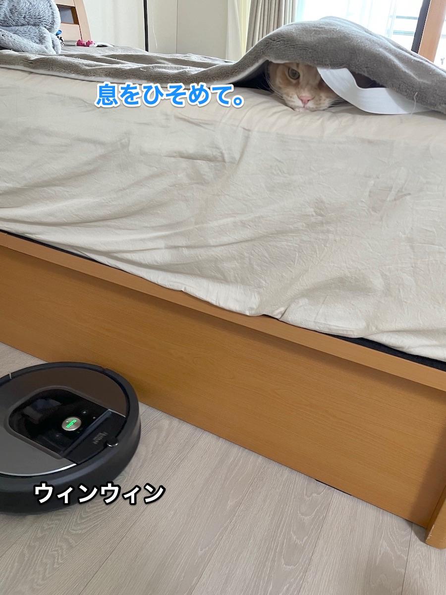 f:id:chikojirou:20210509215008j:plain