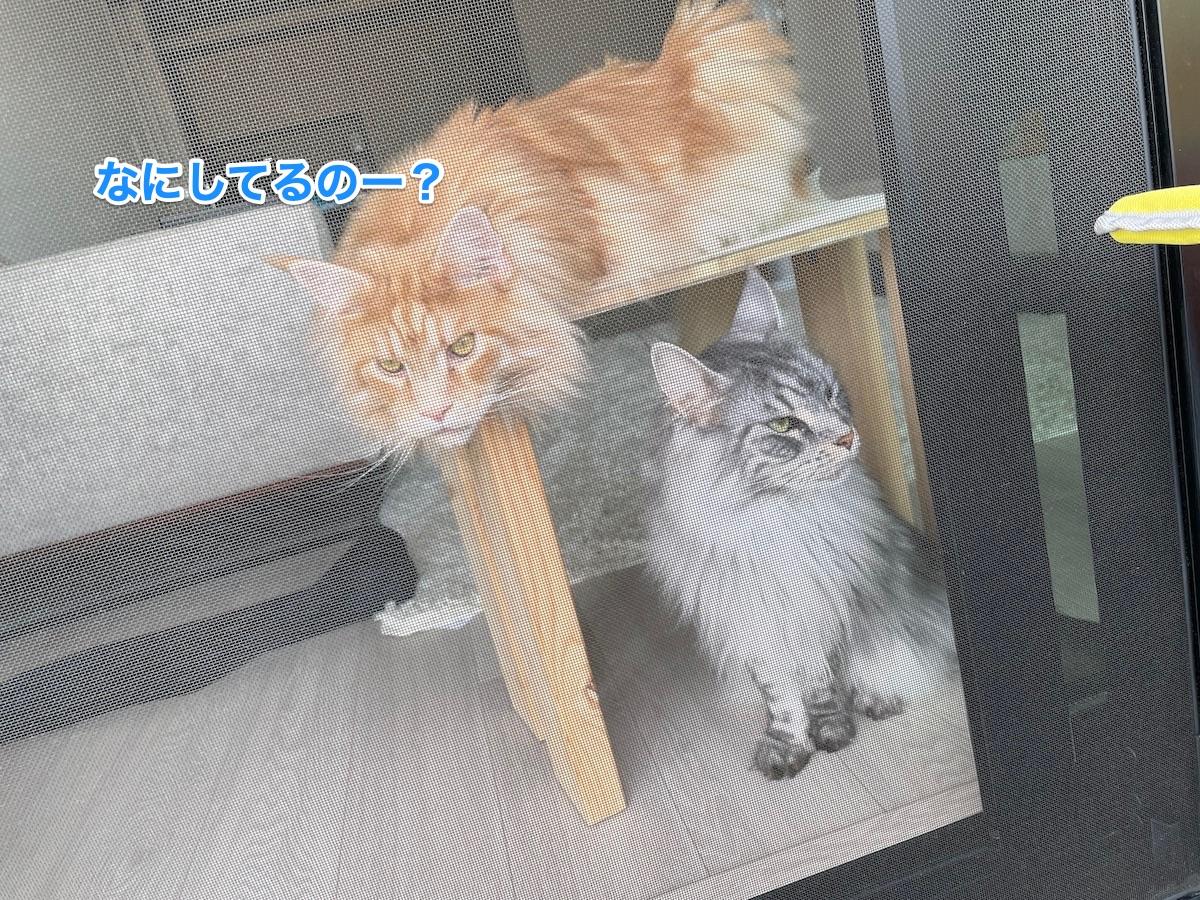 f:id:chikojirou:20210509215011j:plain