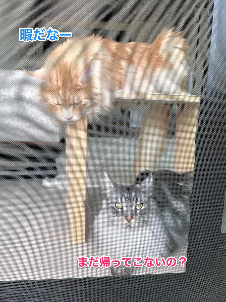 f:id:chikojirou:20210509215015j:plain
