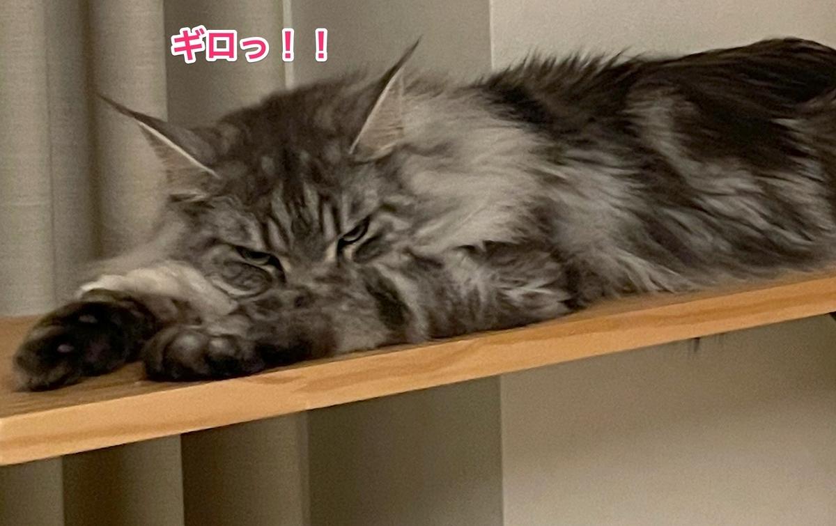 f:id:chikojirou:20210509215023j:plain