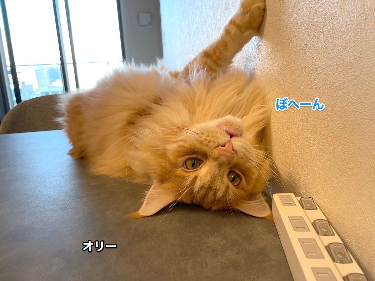 f:id:chikojirou:20210611222820j:plain