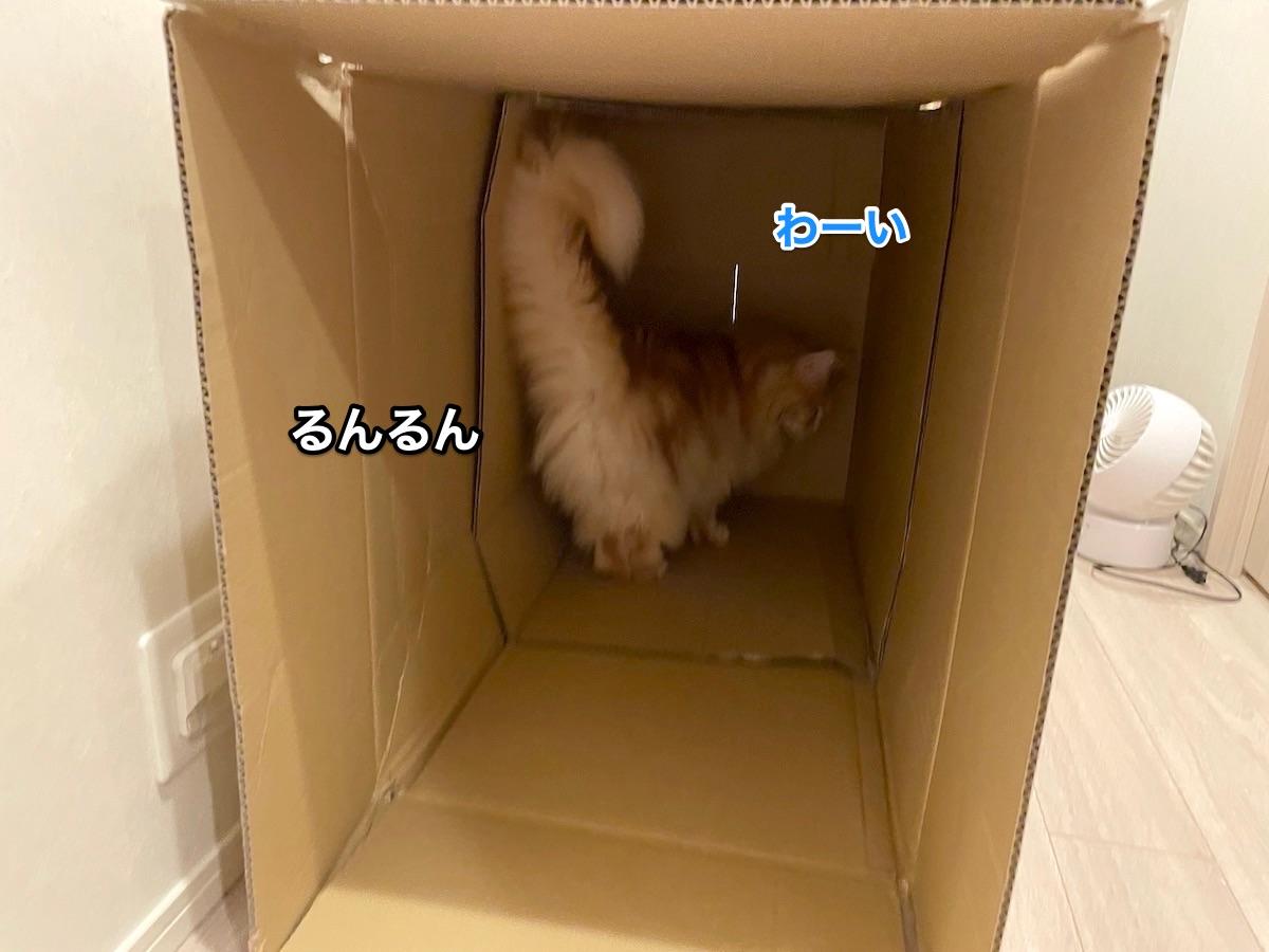 f:id:chikojirou:20210611222836j:plain