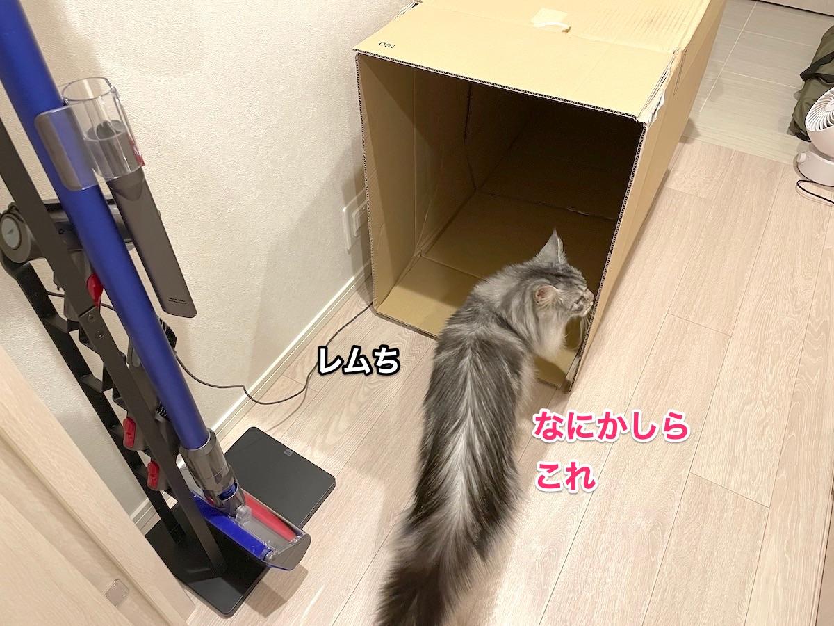 f:id:chikojirou:20210611222839j:plain