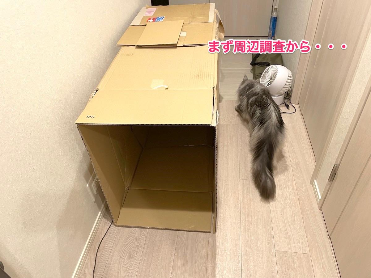 f:id:chikojirou:20210611222842j:plain