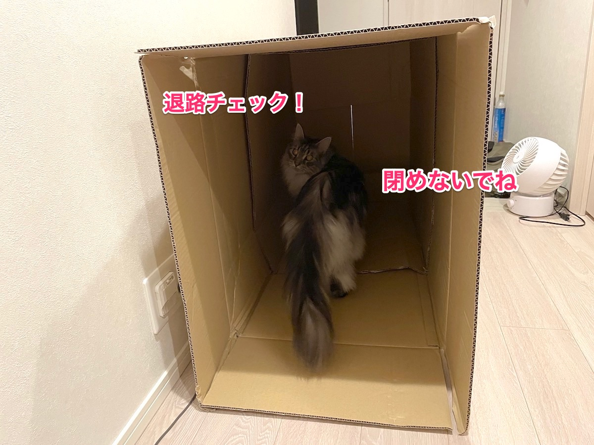 f:id:chikojirou:20210611222846j:plain