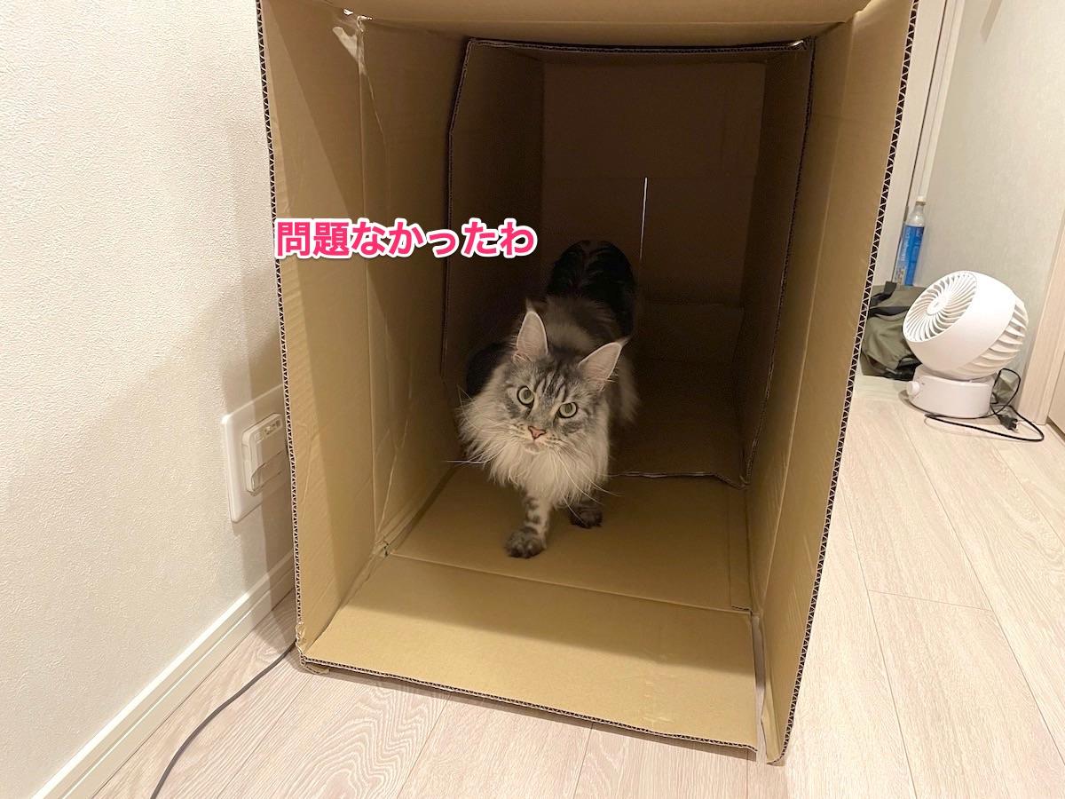f:id:chikojirou:20210611222851j:plain