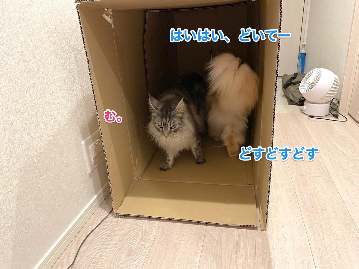 f:id:chikojirou:20210611222854j:plain