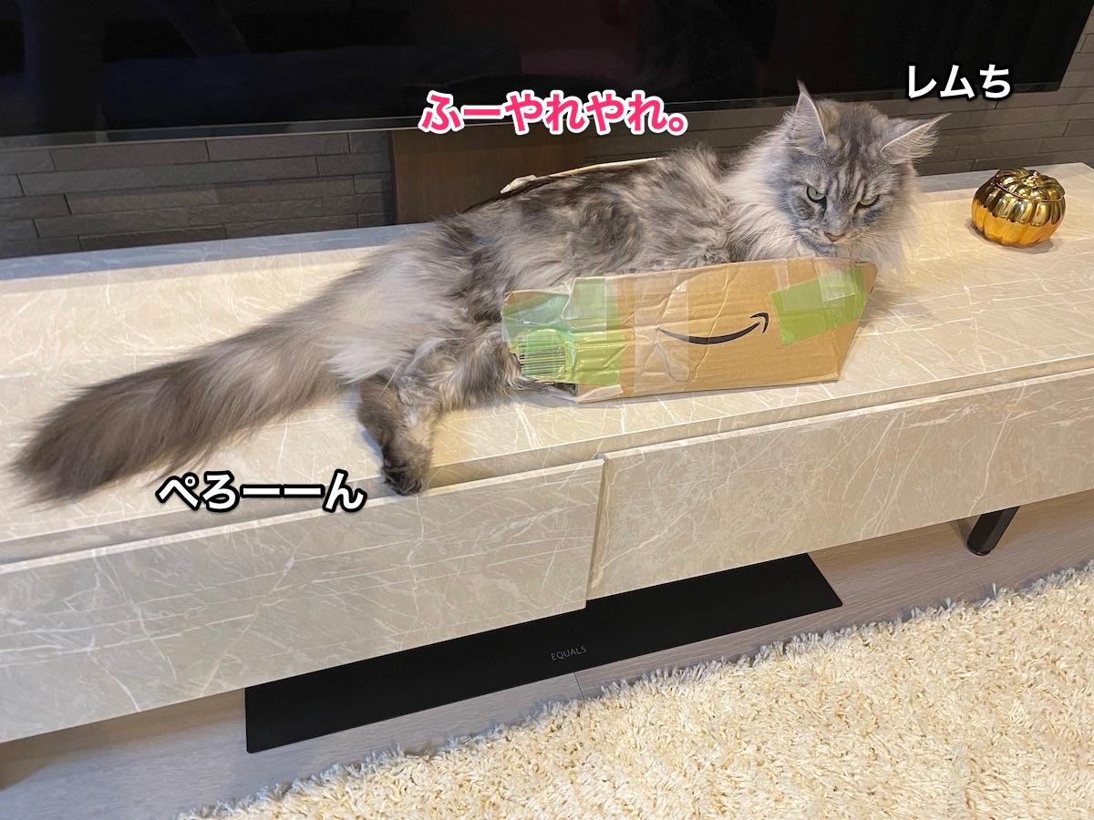 f:id:chikojirou:20210612205824j:plain
