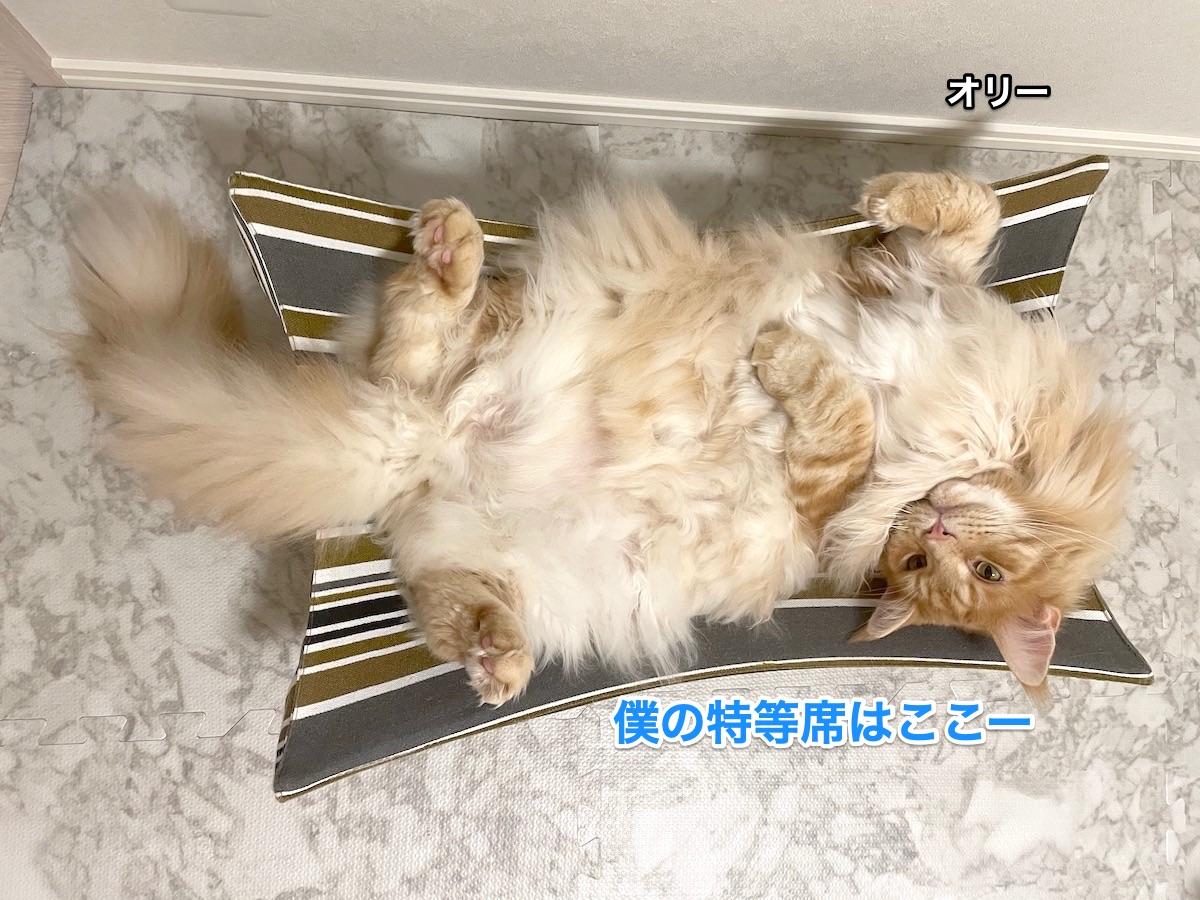 f:id:chikojirou:20210612205833j:plain