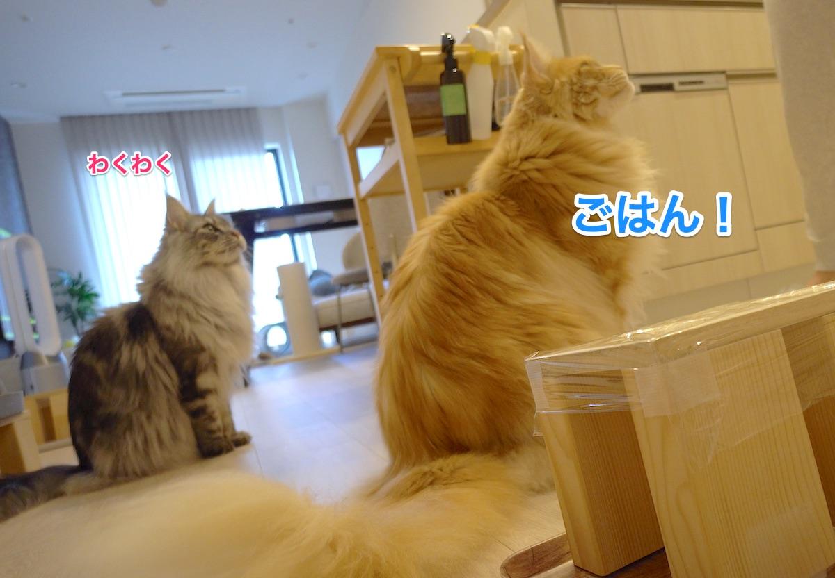 f:id:chikojirou:20210612205837j:plain