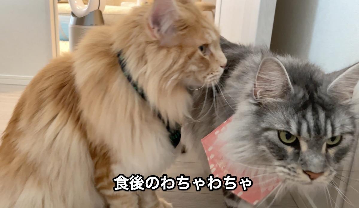 f:id:chikojirou:20210612205849j:plain