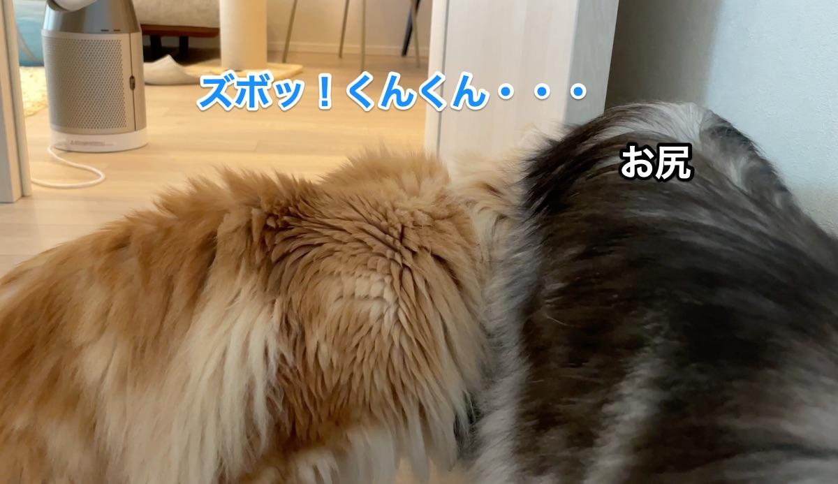 f:id:chikojirou:20210612205852j:plain