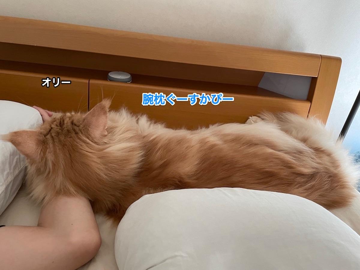 f:id:chikojirou:20210613210123j:plain