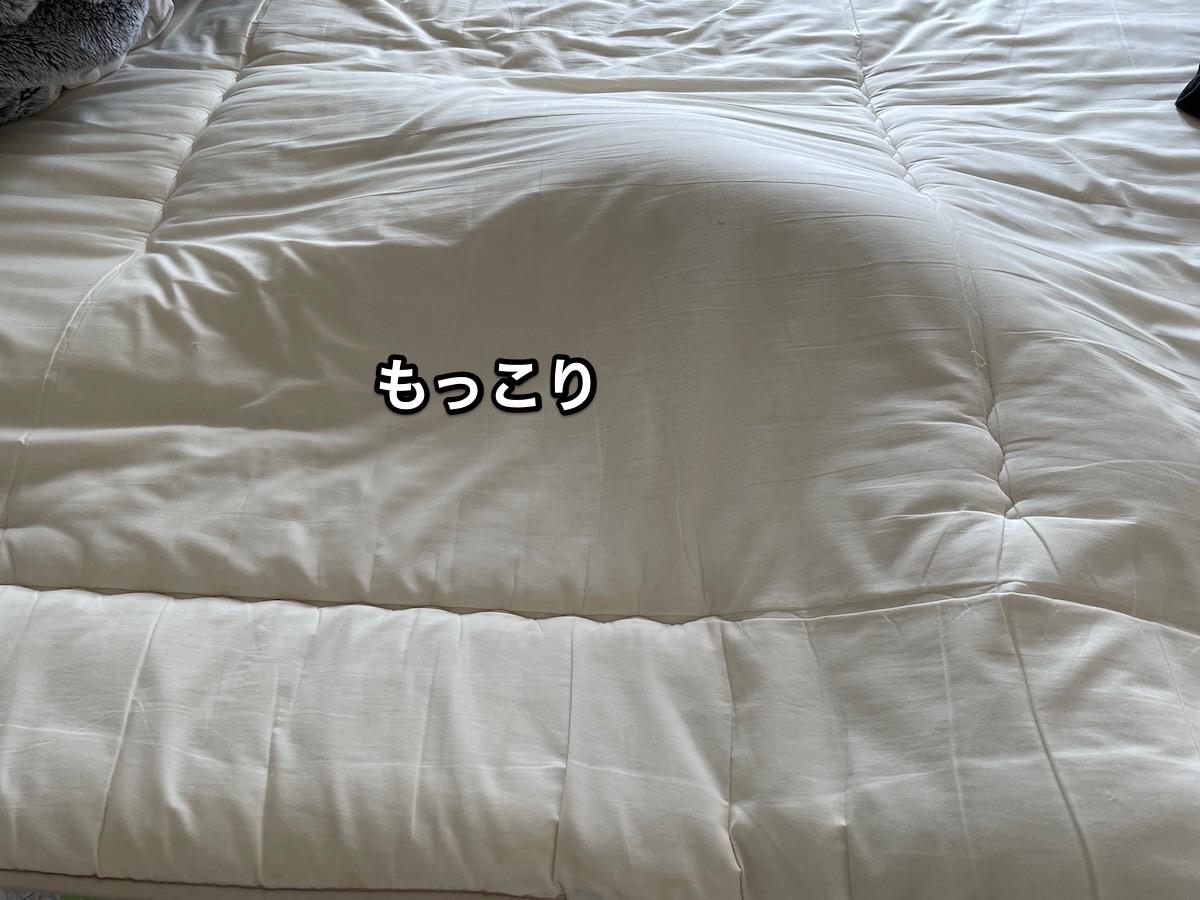 f:id:chikojirou:20210613210127j:plain