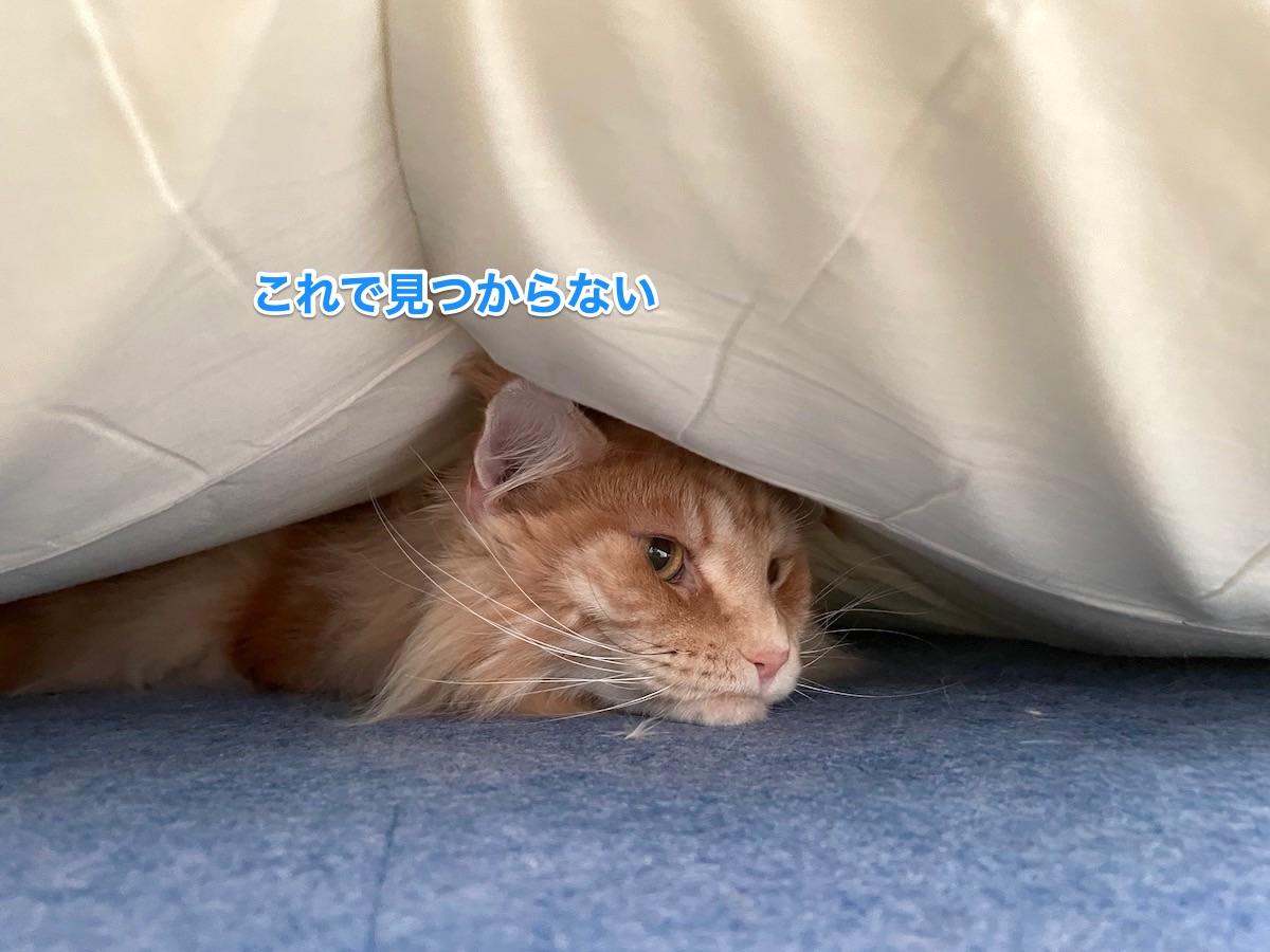 f:id:chikojirou:20210613210133j:plain
