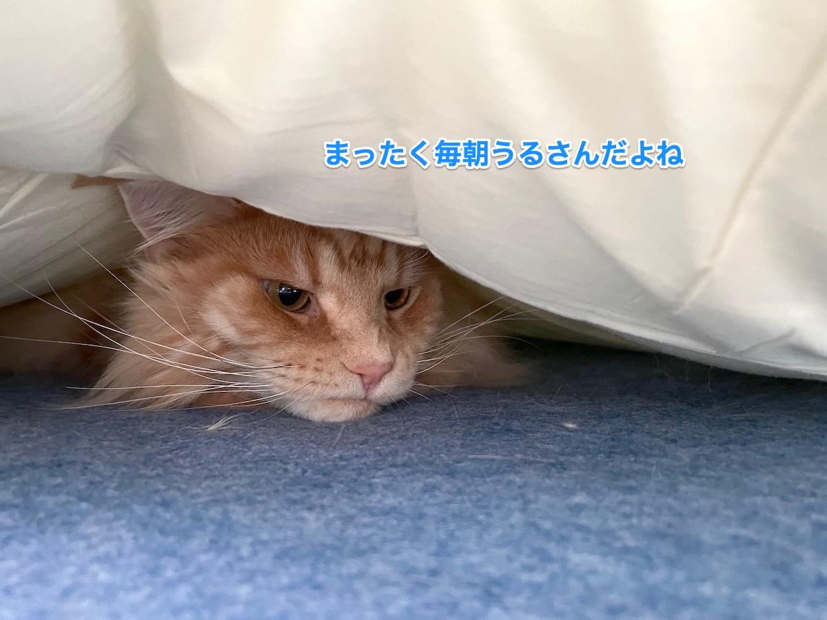 f:id:chikojirou:20210613210138j:plain
