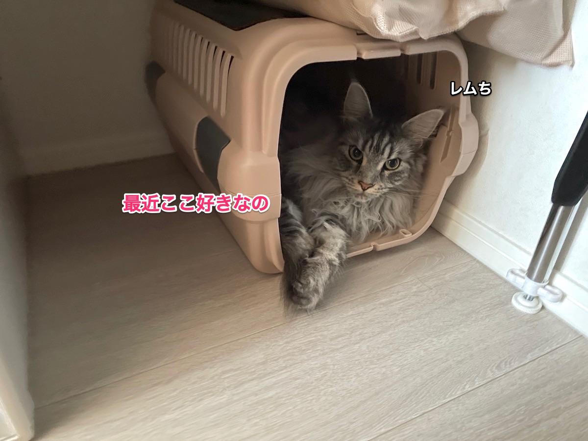 f:id:chikojirou:20210613210145j:plain
