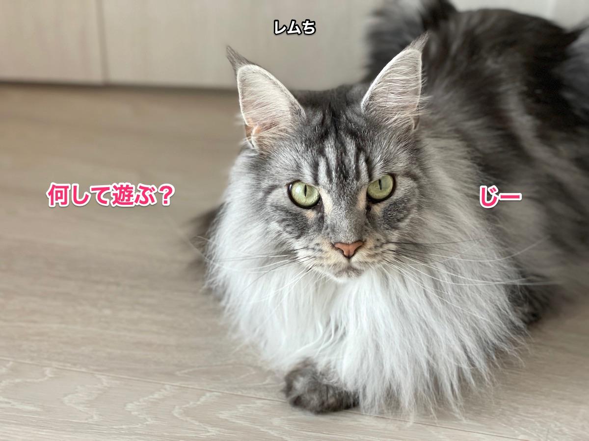 f:id:chikojirou:20210620214633j:plain