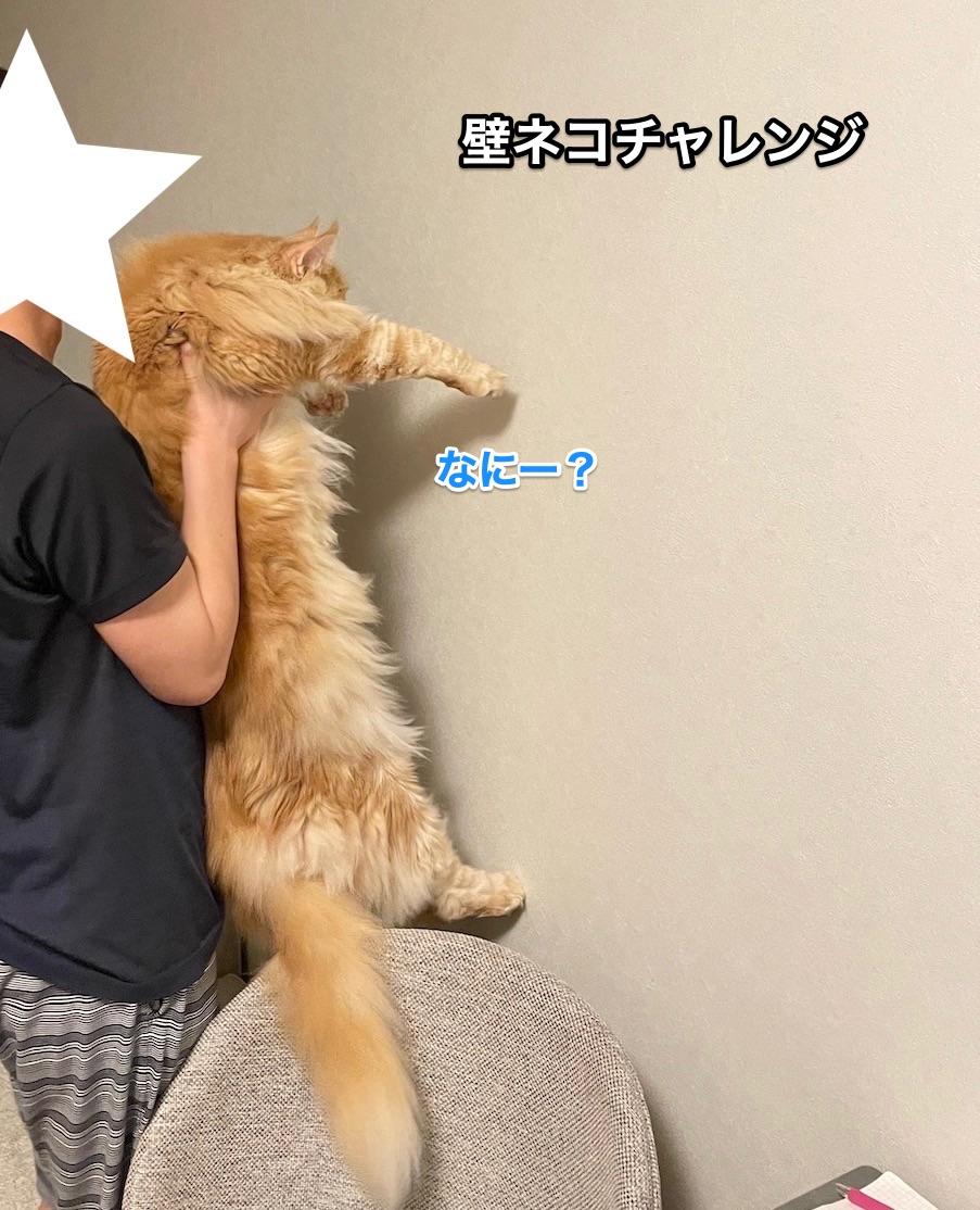 f:id:chikojirou:20210620214649j:plain