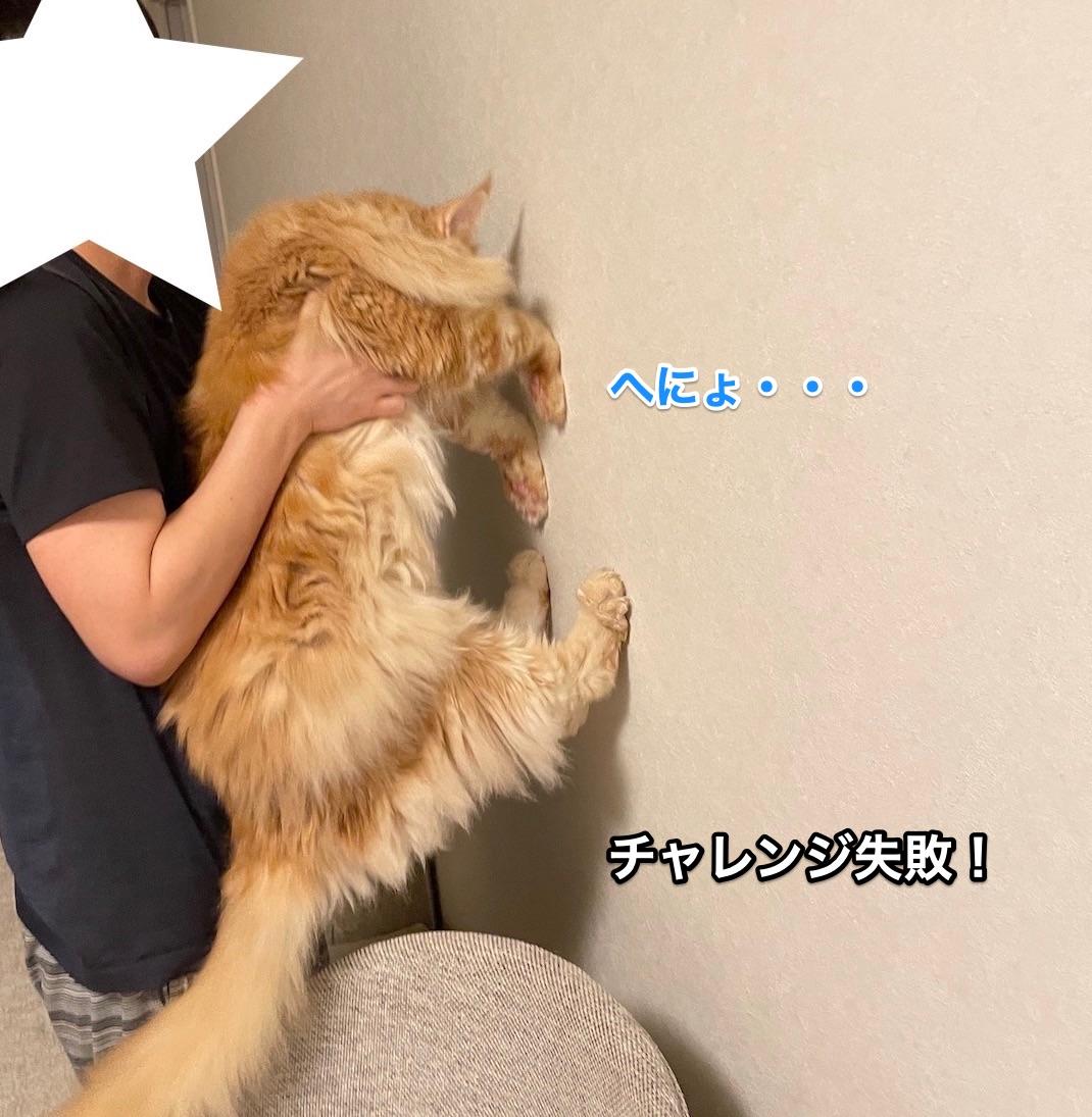 f:id:chikojirou:20210620214652j:plain