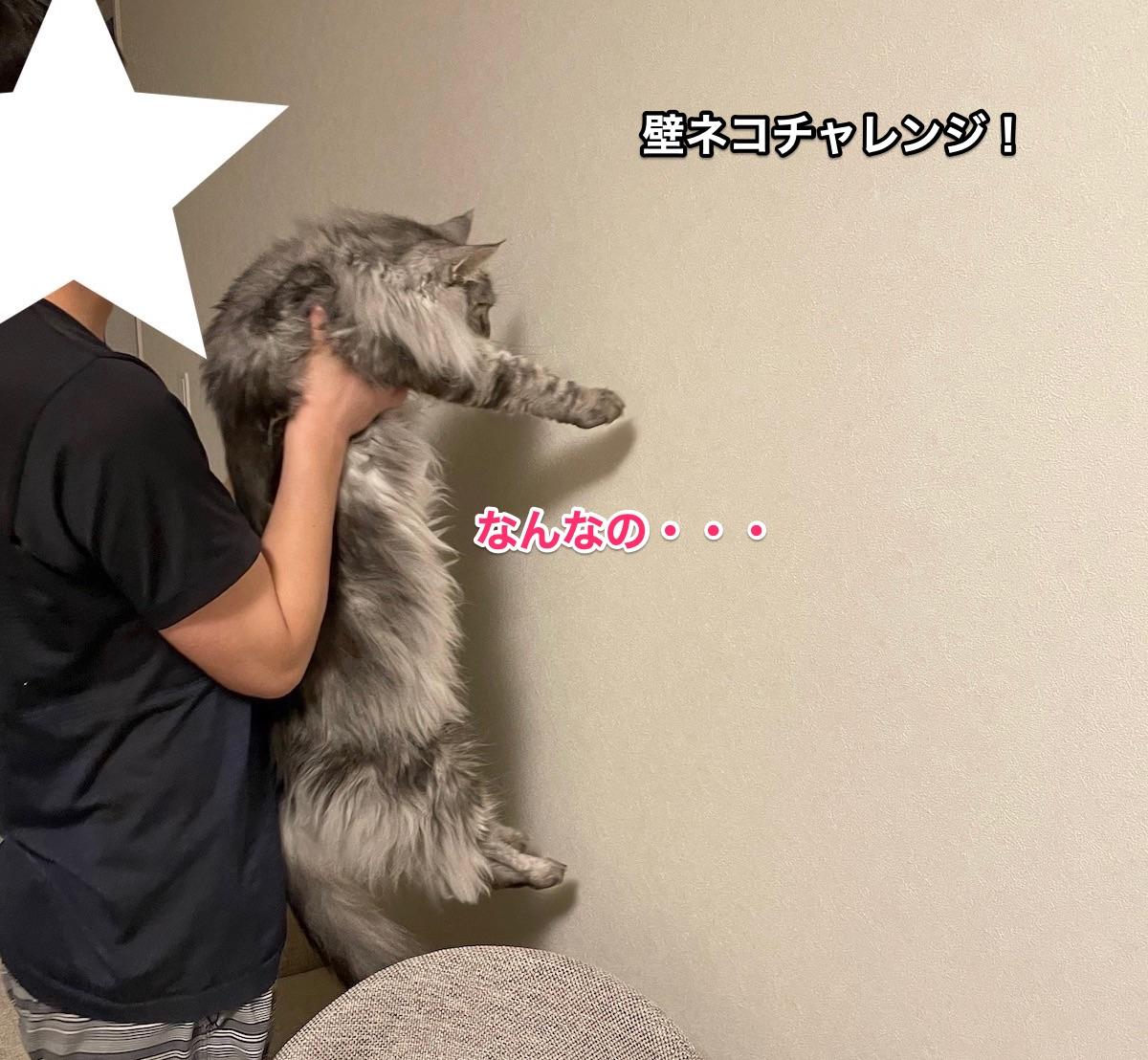 f:id:chikojirou:20210620214658j:plain