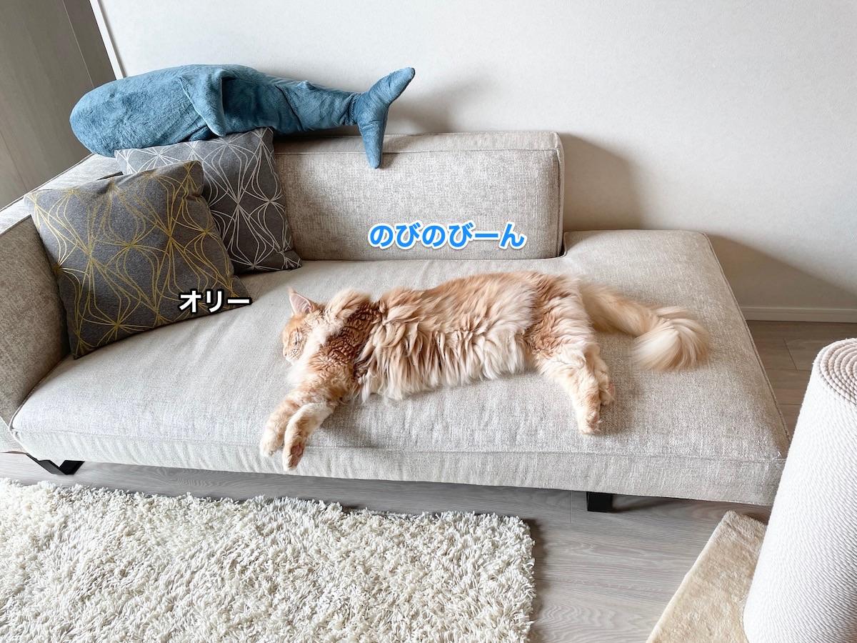 f:id:chikojirou:20210621220539j:plain