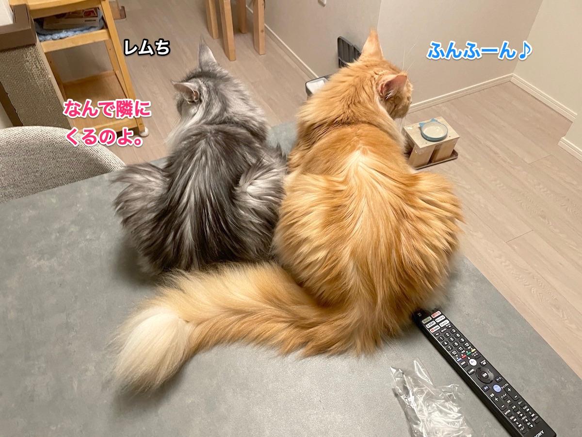 f:id:chikojirou:20210621220546j:plain