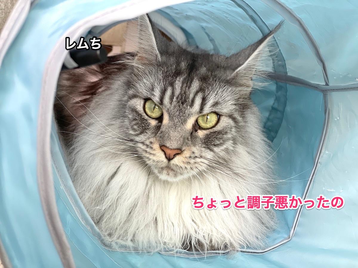f:id:chikojirou:20210706221936j:plain
