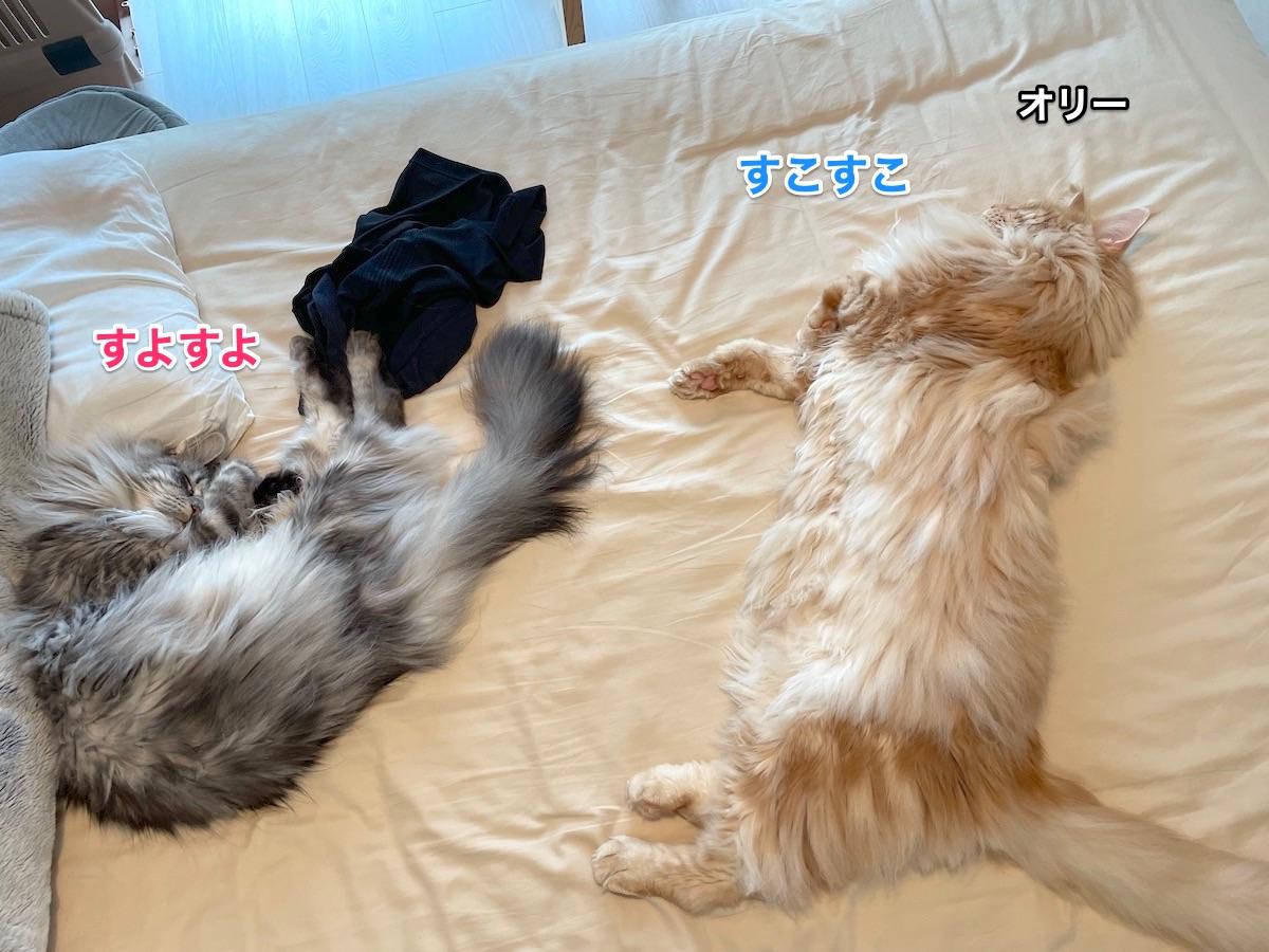f:id:chikojirou:20210706221939j:plain