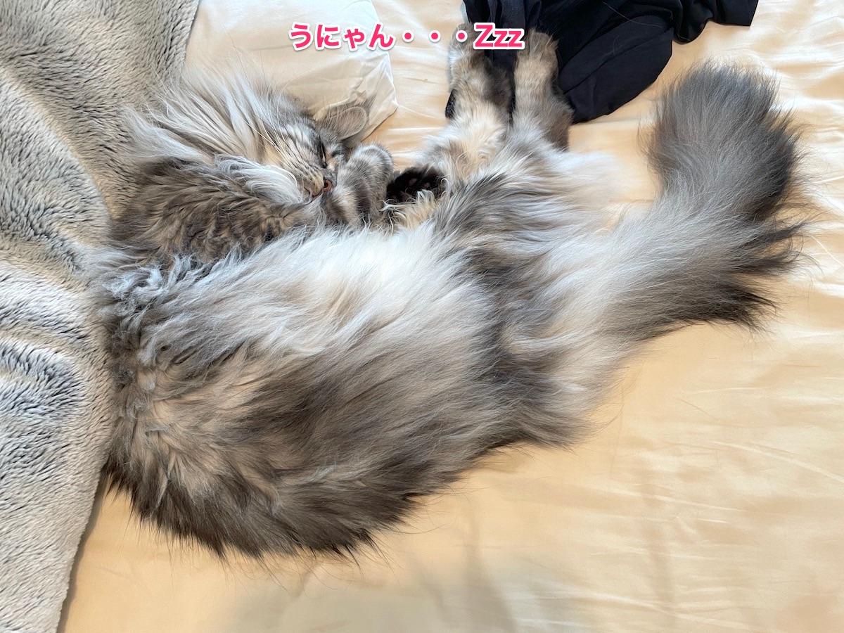 f:id:chikojirou:20210706221942j:plain