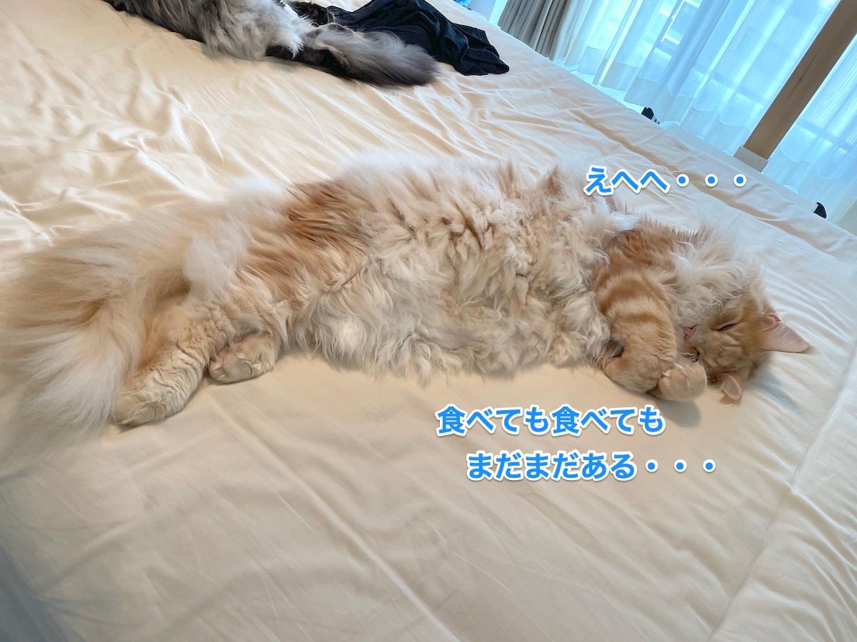 f:id:chikojirou:20210706221953j:plain