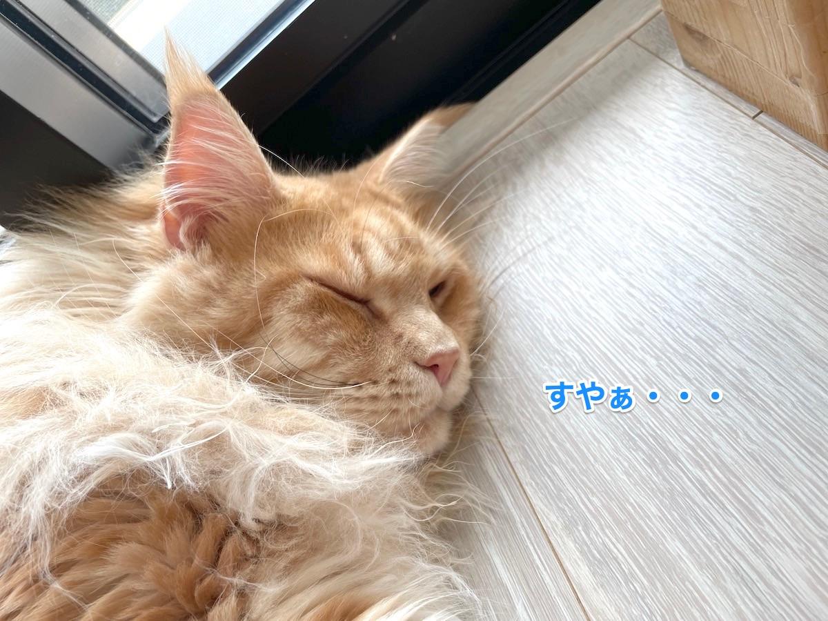 f:id:chikojirou:20210729220130j:plain