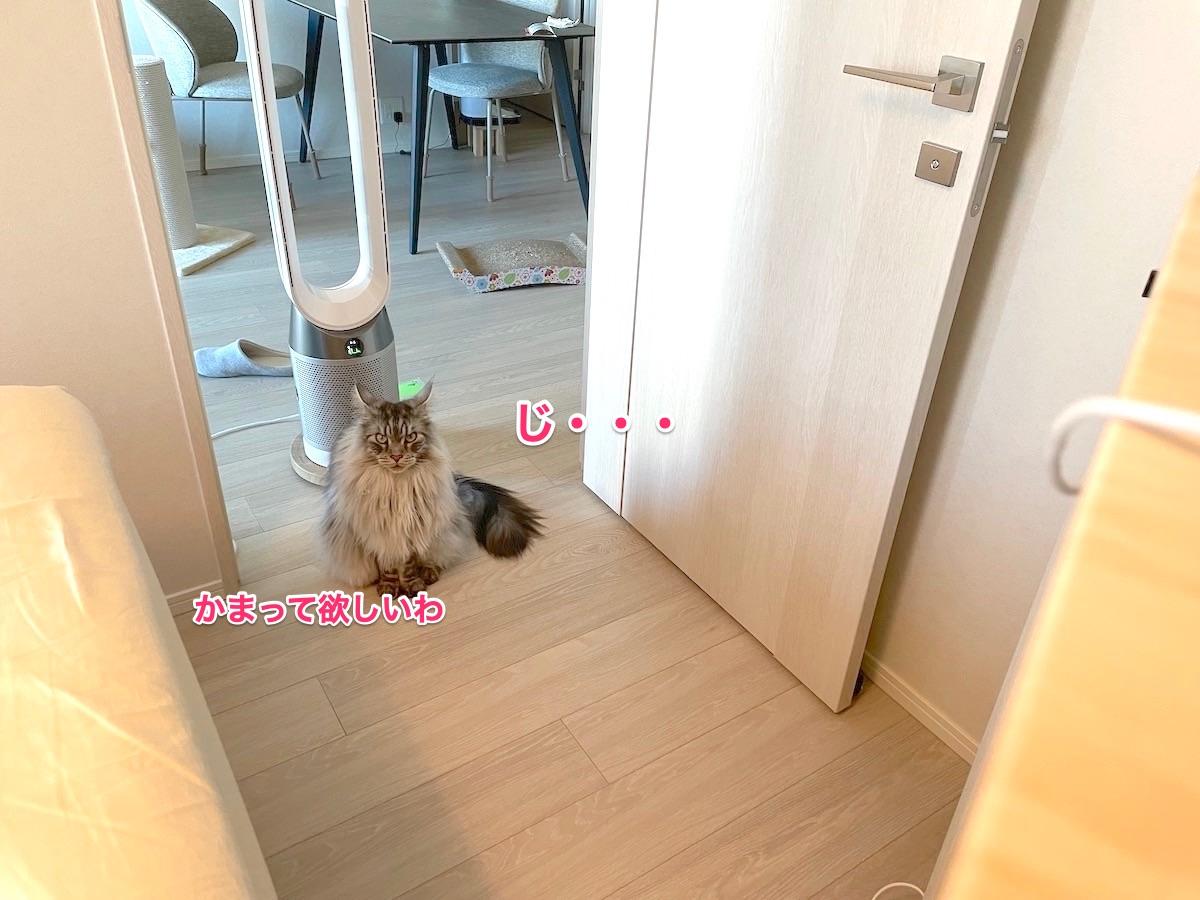 f:id:chikojirou:20210729220133j:plain