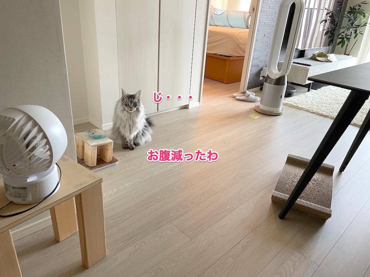 f:id:chikojirou:20210729220137j:plain